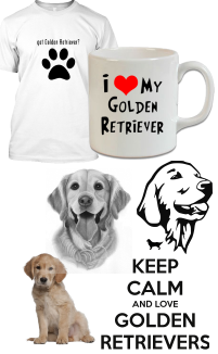 Golden Retriever Kategorisi